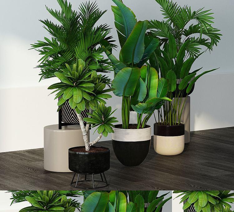 现代植物组合