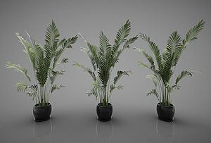 竹子模型3d模型
