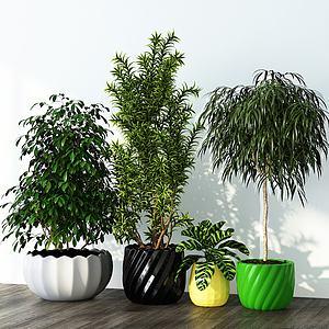 现代绿植盆栽组合模型3d模型