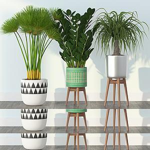 现代绿植盆栽模型3d模型
