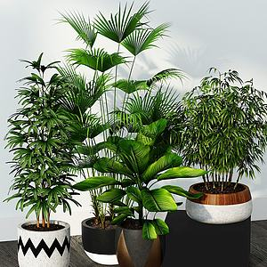 現代小竹子綠植盆栽組合模型3d模型