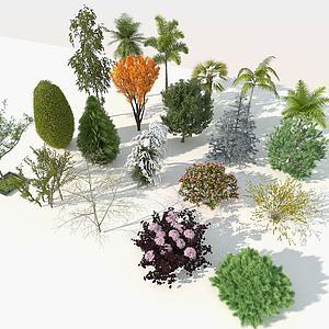 園林樹木組合3d模型