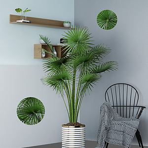 北歐綠植室內盆栽3d模型