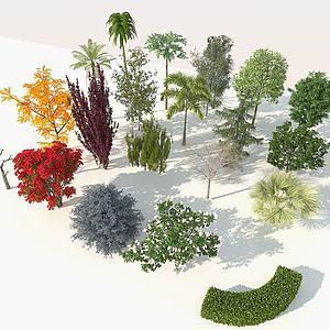 樹木鳥瞰樹景觀樹庭院樹3d模型