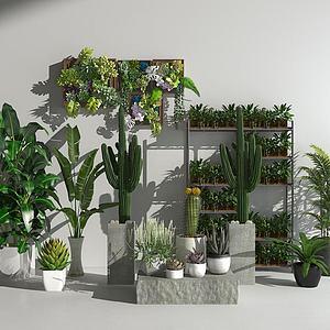 花草植物盆栽绿植模型3d模型