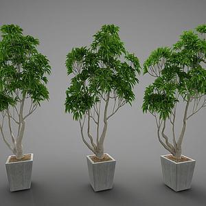 3d現代綠植盆栽模型