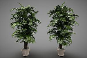 新中式风格的植物模型模型