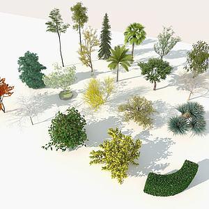 園林樹木3d模型