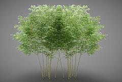樹木3D模型