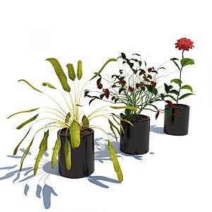 現代植物花草組合3d模型