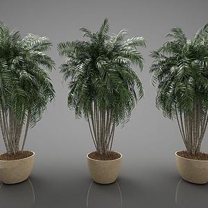 装饰植物3d模型