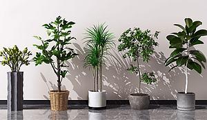 綠植盆栽擺件模型3d模型