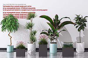 現代盆栽擺件模型3d模型