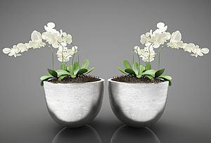 现代风格装饰花瓶模型3d模型