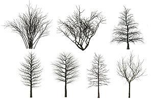 現代樹木枯樹模型3d模型