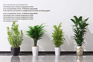 盆栽模型3d模型