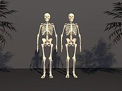 人體骷髏3D模型