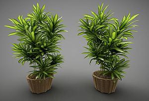 现代风格植物模型3d模型