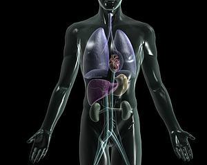 人體各器官心肝脾胃腎模型3d模型
