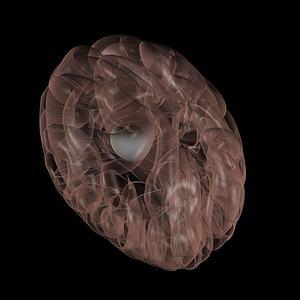 腦垂體3d模型