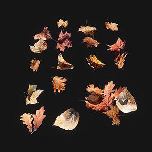 樹葉3d模型