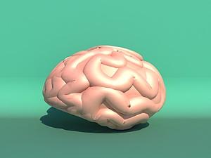 腦垂體模型3d模型
