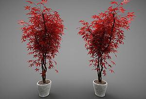 現代風格花盆模型3d模型