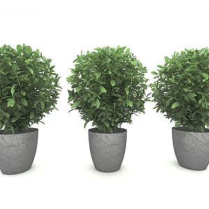 3d綠植<font class='myIsRed'>盆栽</font>模型