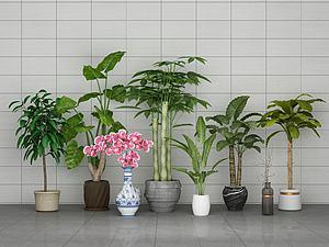 中式綠植盆栽模型3d模型