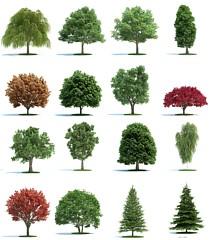 3D裝飾植物樹模型