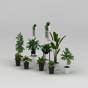 绿植盆栽模型