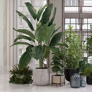 3d植物花卉<font class='myIsRed'>盆栽</font>綠植組合模型