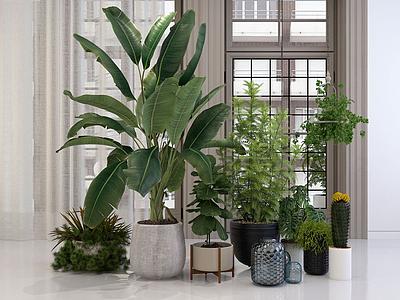 3d植物花卉盆栽綠植組合模型