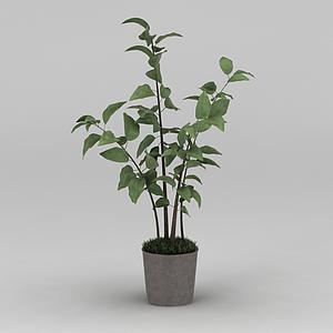 3d現代小樹苗綠植盆栽模型