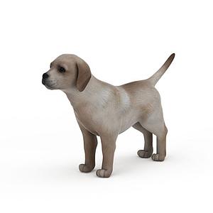 花色小狗模型