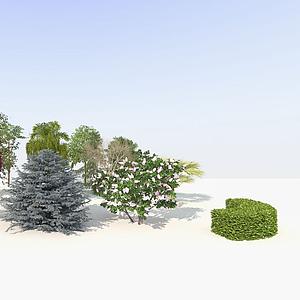 樹木鳥瞰樹景觀樹庭院樹模型
