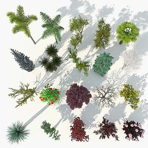 樹木9-雙數模型