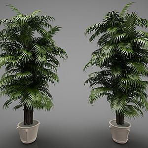 新中式風格的植物模型