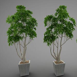 3d現代綠植<font class='myIsRed'>盆栽</font>模型