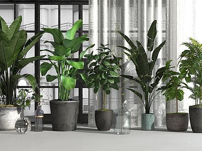 3d花草植物盆栽綠植模型