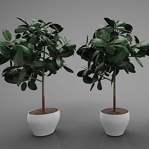 3d装饰植物模型