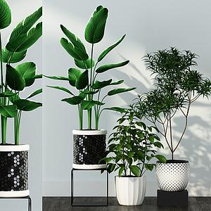 3d綠植<font class='myIsRed'>盆栽</font>組合模型