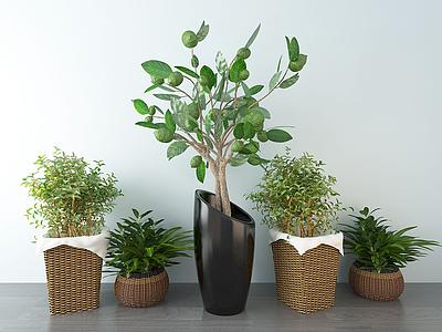 3d北歐綠植盆栽模型