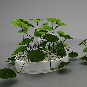 裝飾植物模型