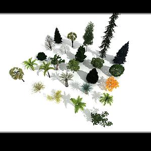 精品樹木集合模型