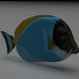 五彩魚模型