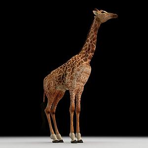 長頸鹿模型