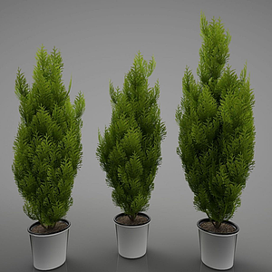 現代綠色植物盆栽模型