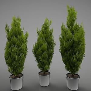 3d現代綠色植物<font class='myIsRed'>盆栽</font>模型