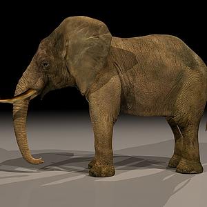 動物大象模型